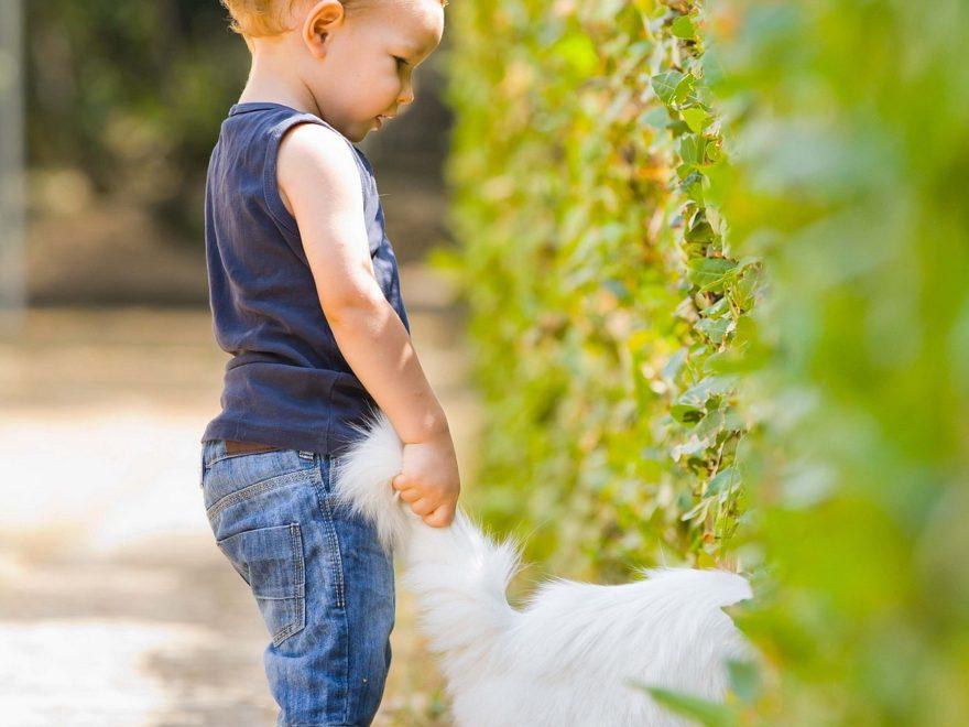 Babyer og kæledyr